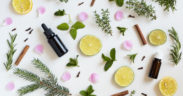 Using cannabis plants as medicine