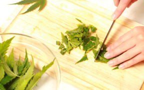 chopping raw cannabis leaves for salad